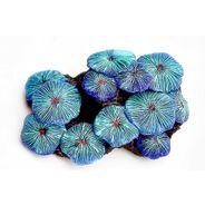 Coral-Ricordea-Azul-Soma