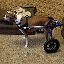 Cadeira-de-Rodas-Walkin--Wheels-Caes-Acima-de-32kg