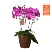 Orquidea-Phale-Vaso-Diamante-selo