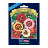 Chrysanthemum-Burridge