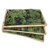musgo-caixa-madeira-all-garden