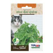 Semente Erva dos Gatos Topseed Garden